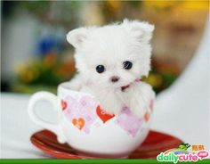 The 15 Cutest Baby Animals Ever Photographed. Ever. - Daily Cute