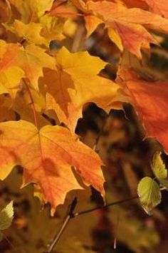 Preserve autumn leaves for use in fall arrangements and wall art.