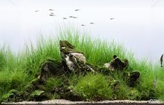 "simonsaquascapeblog: ""Favourites: 'Old Stones' by Marcin Grandson I specially love the vintage look of those stones. I wonder how that was done… This nano tank was presented at the DENNERLE Scaper's..."