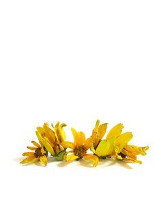 yellow daisies   STILL (mary jo hoffman)
