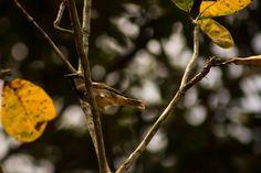 """87 curtidas, 1 comentários - Lentes de um Biólogo (@lentes_de_um_biologo) no Instagram: """"Série: Nossas riquezas.. Fauna ... #photodaily #photolove #pará #photography #photo #photos…"""""""