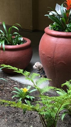 This is Samwise a tiny potato and an adventurer. http://ift.tt/2qZozmY
