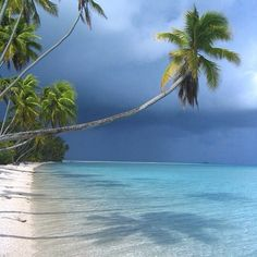 Fakarava - Tahiti dreaming - beautiful palm trees over the ocean private beach - Tropical summer beach vacation escape Beautiful Islands, Beautiful Beaches, Beautiful World, Dream Vacations, Vacation Spots, Places To Travel, Places To See, Porto Rico, Tropical Beaches