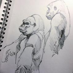 Gorillas popping up everywhere. #pencil #sketch #sketchbook #sketching #sketches #draw #drawings #drawing #draweveryday #drawingismylife #gorillalife #animalkingdom #animallover #animaldrawing #wildlife #wildlifelover #wildlifelovers #endangeredspecies #graphite #blackandwhite #conservation #conservationart