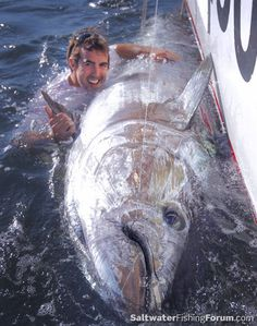 900-pound bluefin tu