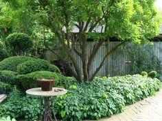 Organic Gardening For Beginners Refferal: 6982955306 Garden Shrubs, Garden Edging, Garden Borders, Garden Plants, Garden Landscaping, Plants Under Trees, Shade Flowers, Low Maintenance Garden, Woodland Garden