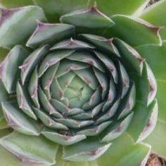 Mustármag kúra, mely hatalmas tisztulást ad a testnek - Egészségtér Herb Garden, Artichoke, Animals And Pets, Natural Remedies, Vitamins, Succulents, Health Fitness, Medical, Herbs