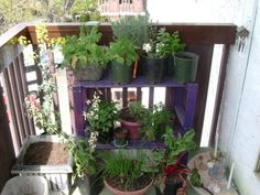 purple shelf for more container space