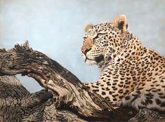 Pet Portraits vs Wildlife Art - Why I Adore Both - Henriette van Staden Wildlife Paintings, Wildlife Art, Tell Me Something Funny, Love Drawings, Pet Portraits, Original Art, Country, Pets, Creative