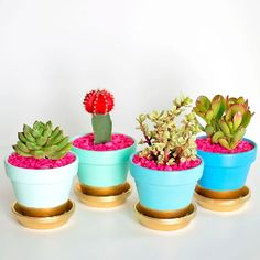 "Fun, colorful, and perfect for Spring.  You've got to come see how easy it is to make these ""gold dipped"" succulent pots!"