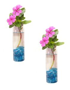 Pack of 2 Glass Planters Wall Hanging Planters Glass Air Plant Pots Fl – makesly