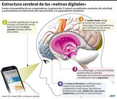 """Estructura cerebral de los """"nativos digitales"""" - Investigación y Desarrollo"""