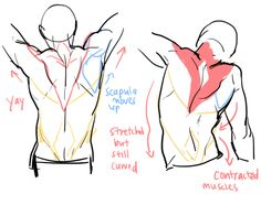 Tutorial for drawing backs. Click through for more pictures