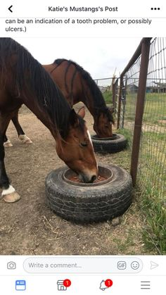 Ground feed for horses to help prevent choke