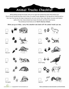 Worksheets: Animal Tracks Guide  has 2 matching tracks worksheets to go along with it also.