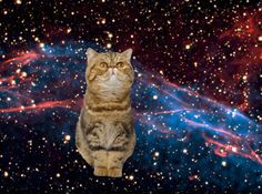 another cat in space!