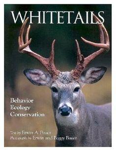 Whitetails (QL 737 .U55 B388 1993)