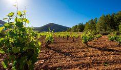 Ruta del Vino de Bullas