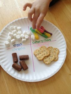 Edible Butterfly Life Cycle--I'm going to use this idea rigiht away, except chrysalis is spelled incorrectly (that's the teacher in me making corrections!).