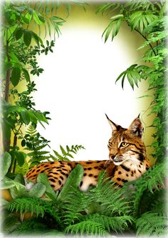 Photo Frame - Jungle Cat