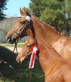 Bella Top filly foal by ZZ TOP 2011