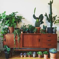 Collection of cacti and pants on teak - House Plants Decor, Home And Garden, Room, Interior, House Plants Indoor, Home Deco, Plant Decor, Plant Shelves, Indoor