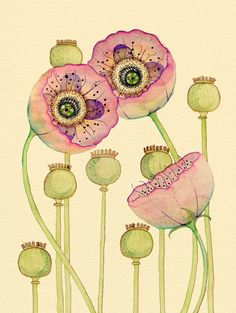 Poppies Pods; another wonderful artist.....i just LOVE ink and watercolor!