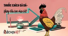 Thuốc chích gà đá - Có thể bạn chưa biết - GaChoiViet.Com Mexico, Movie Posters, Movies, Films, Film Poster, Cinema, Movie, Film, Movie Quotes