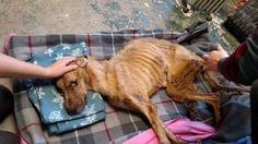 "Shanna Lynn added 3 new photos. February 21 at 9:08pm · Cedar Rapids, IA This dog has died. Please look at the pictures of what these 2 people did to this poor dog and then take 5 minutes to email or call this school, where she works with small children, and let them know of your disapproval.  These pictures show the amount of ""compassion"" she clearly does NOT possess, they starved this dog to death, it had burns all over it from laying in its own fecal matter and urine. They left it by a…"