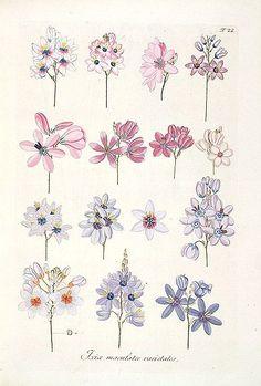@julittleblog Illustration, Flower, Zeichnung, Sketch, Poster, Blumen, Flower Power