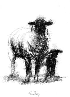Ewe and lamb, Artist Sean Briggs producing a sketch a day, prints available at https://www.etsy.com/uk/shop/SketchyLife ##illustration#ink#print#draw©#Sean_Briggs #art #drawing #ewe #lamb #sheep #sketch