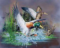 13 ducks