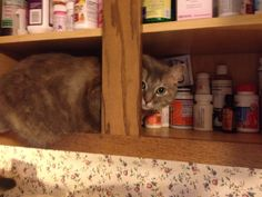 I opened this cabinet for a few minutes and Kitty boo had to check it out