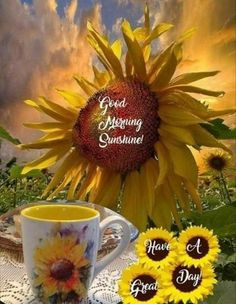 10 Beautifully Made Good Morning Quotes With Flowers Good Morning Coffee, Good Morning Sunshine, Good Morning Greetings, Good Morning Good Night, Morning Wish, Sunday Morning, Sunflower Quotes, Sunflower Pictures, Sunflower Art