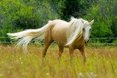 Palomino: Explored by Boreal Photography, via Flickr