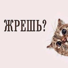 (3) Твиттер