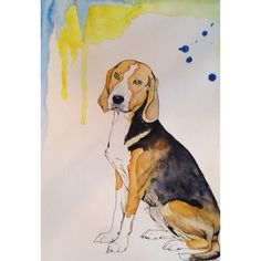 """#wip - """"Superdiva Fisförnäma"""", som mamma Christina kallar henne  - World Champion 2008. #hound #hamiltonhound #hamiltonstövare #stövare #SwedishFoxHound #aquarelle #watercolour #akvarell #portrait #porträtt #draw #drawing #ink #pen #micron #sketch #sketching #painting #rita #måla #teckna #art #artnerd"""