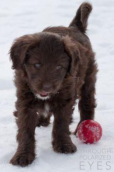 co puppy