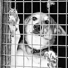 El maltrato animal se castigará en Galicia con sanciones más elevadas con el objetivo de proteger a los animales. Lo importante de las Leyes es que se apliquen ¿Creéis que servirá de algo?