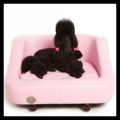 Chester & Wells Richmond dog bed is now on sale. See the range of stylish dog beds from Chester & Wells online now! Pink Dog Beds, Pet Beds, Doggie Beds, Chihuahua Bed, Dog House Bed, Orthopedic Dog Bed, Dog Furniture, Pet Boutique, Shih Tzu Dog