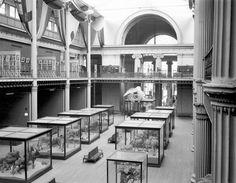 Interior of the Field Museum, Jackson Park, 1898-1916.