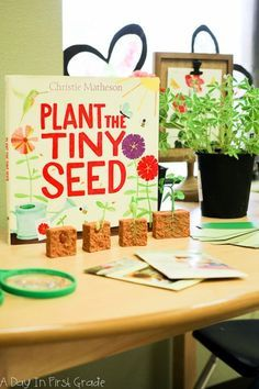 Science Preschool Reggio - The beginning of a plant inquiry Science Area, Plant Science, Preschool Science, Science Centers, Preschool Themes, Science Resources, Science Classroom, Teaching Science, Teaching Reading