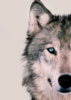 Wolves and dogs diy christmas crafts with paper - Diy Paper Crafts Artwork Lobo, Wolf Artwork, Wolf Photos, Wolf Pictures, Wolf Wallpaper, Animal Wallpaper, Beautiful Wolves, Animals Beautiful, Animals And Pets