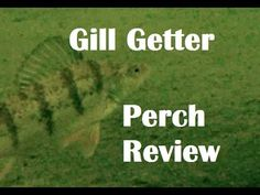 Northland Tackle Gill Getter Underwater Perch Review GoPro