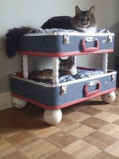 Make a bed out of old suitcase for your hipster kitty. T his is amazing