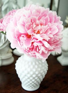 love the simplicity - white vase and peony