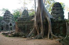 mowao.pl / Podróże / Angkor Trunks, Plants, Drift Wood, Planters, Plant, Planting