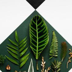 Frisches Grün für Ihr Zuhause