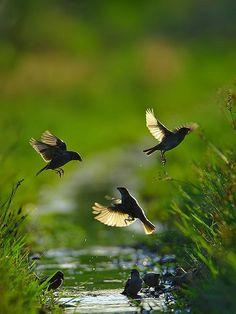 Birds flying in Spring Time