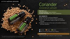 Popular across many cultures for various uses, coriander essential oil is extracted from the seed of the coriander plant. Coriander's healthful therapeutic benefits, which can be attributed to its extremely high linalool content, range from digestive support to maintaining an already healthy insulin response.